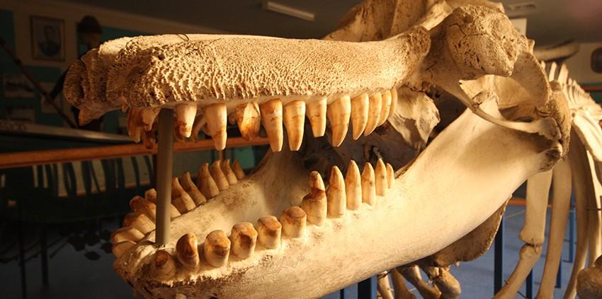 sapphire-coast-nsw-eden-killer-whale-museum-credit-sarah-chenhall